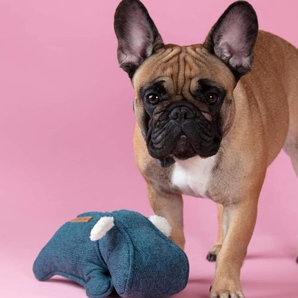fransk bulldog, legetøj til små hunde, havaton hund