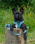bedst i test hundesele, engelsk bulldog
