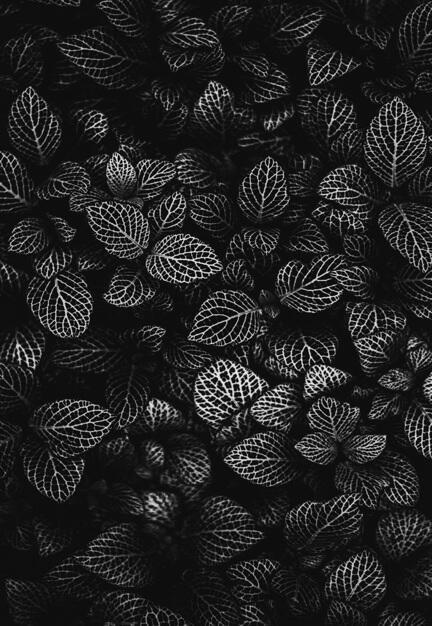 fotomester blomsterbed blomst