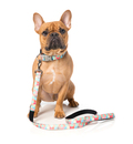 hunde og is stor vandskål hund vandskål til hund seler til hunde der trækker hundeseler hvalp snapper dækken hund lyshalsbånd leg med din hund 4pets pro 4 medium lysende halsbånd hund seler til små hunde separationsangst hund træning slanke godbidder til