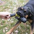 hund-med-KONG-hundelegetøj-jaxx-braided-tug-stor