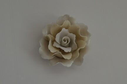 porcelænsrose, rose