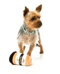 Plyslegetøj til hunde | Køb bamsen til din bedste ven
