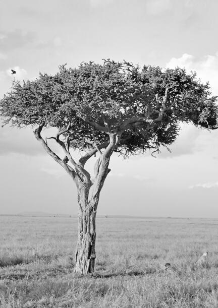 fotomester savanne kenya masai mara