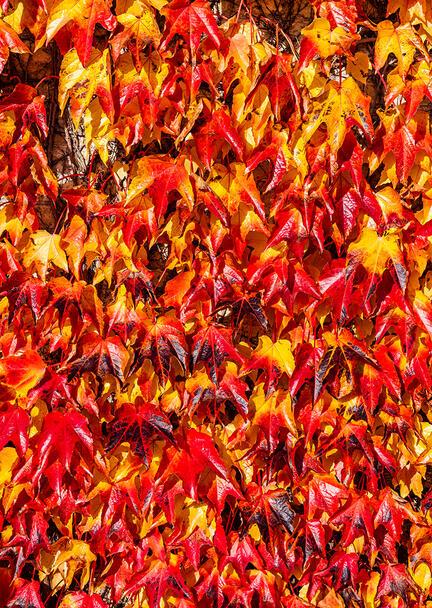 fotomester efterår gul rød