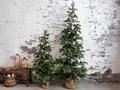 Chic Antique, Grantræ. 210 cm