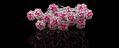 Smukke roser til håret Hairpins fra SpaNews