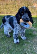 legetøj til hundehvalpe, stærkt hundelegetøj, hund legetøj