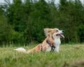 bedste sele til hund, verdens bedste hundesele
