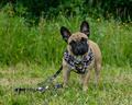 RUFFWEAR SELE, SELE TIL HUND, seler til hunde, antitræk seler