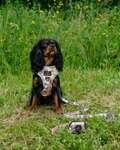 hundesele tilbud, bedste hundesele test, køb hundesele