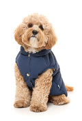 støver hund, hunde sælges, snusetæppe, vom hundemad, bamsehund