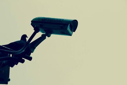 søgeordsovervågning