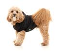 hundekurv til lille hund, snusetæppe, kølemadras, hundekurv, legetøj hunde