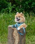 salg, hvalpe, salg 202o, til salg, gratis, hunde, aktivitetslegetøj