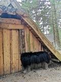 Viking udeliv sort islandsk lammeskind Nordic Living