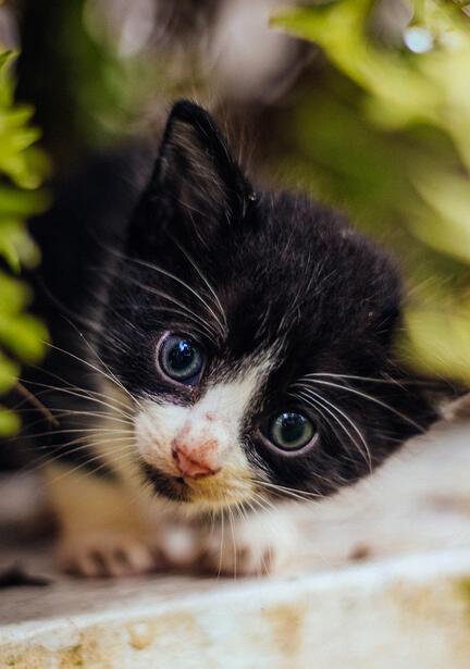 kat killing fotomester