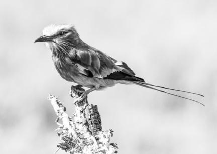 fotomester fugl