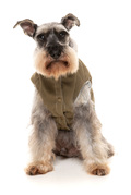 hundefrakker, hundefrakke, varm hundejakke, hundejakke tilbud