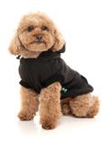 tøj til lille hund, tøj til hund, hundekurv med hule,