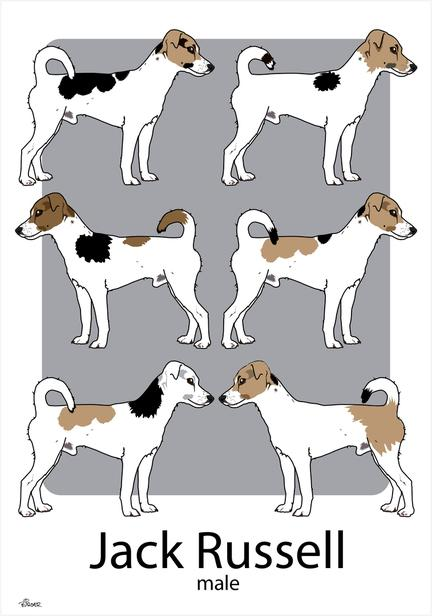 Dog Jack Russell vector drawing tegning poster plakat ©Birger #jackrussell #doglovers