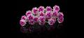 Lyseroede roser til opsætning af hår